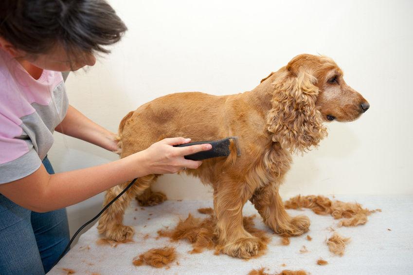 benefit of grooming