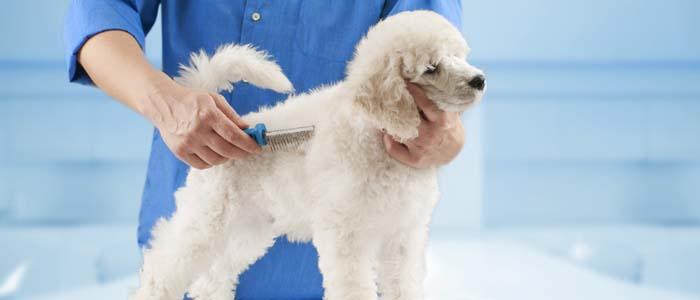 Benefits of grooming